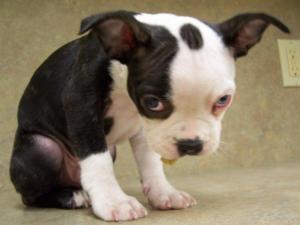 Sad-dog-face